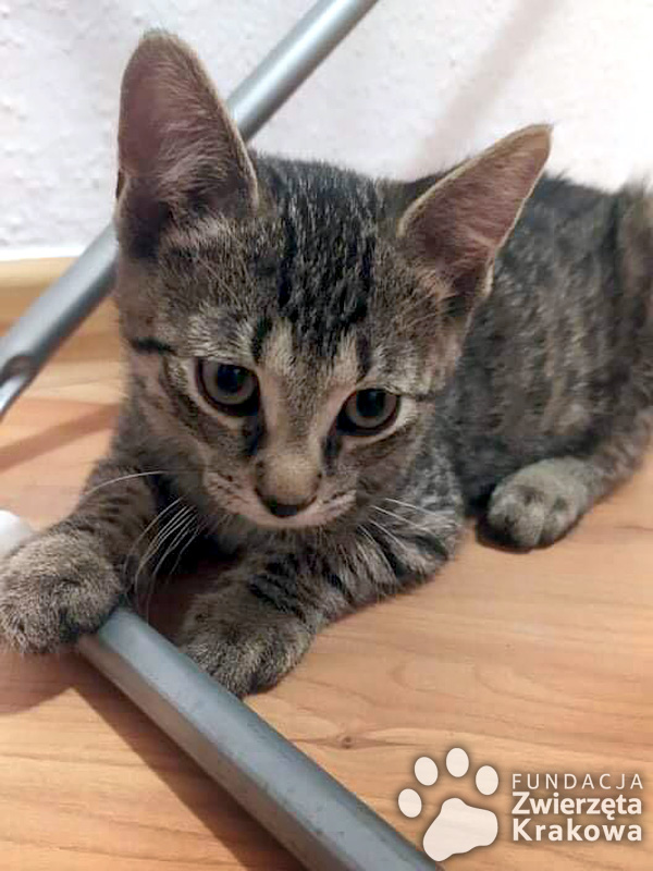 Kocięta szukają domu