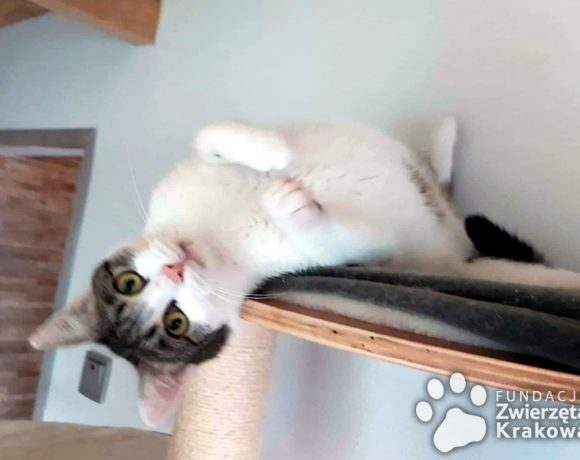 Pawełek kot bez wad