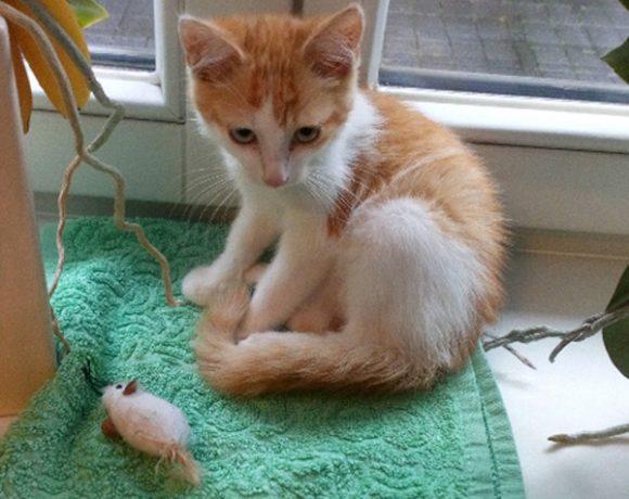 Rudi – piękny mały rudzielec szuka domu